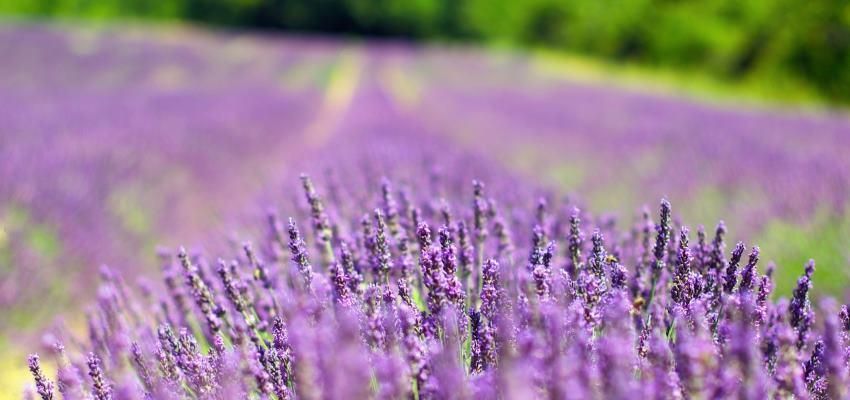 Provence – Les Plus Beaux Villages