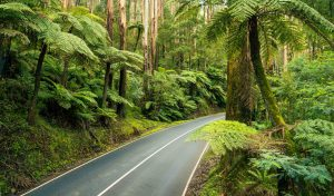Cycling in the Yarra Ranges VIC
